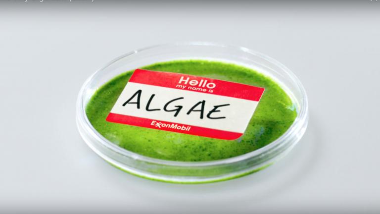 Greenwashing Exxon: vergrootglas op onderzoek (!) naar algen